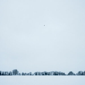 Agricultural Field in Winter